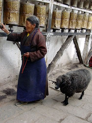 Tibetan woman & sheep praying