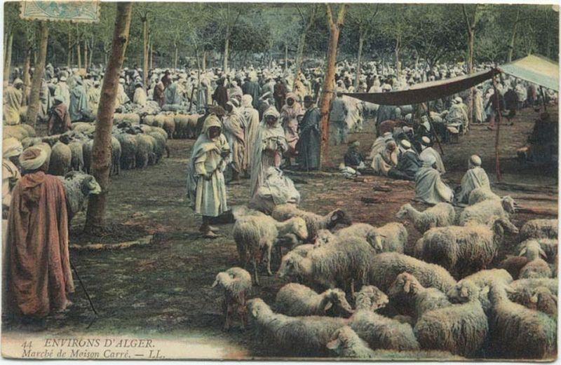 Algeria Sheep Market 1906