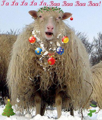 Winter Sheep 4