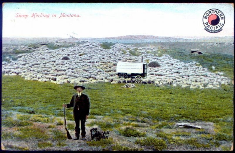 Montana Shepherd & Dog