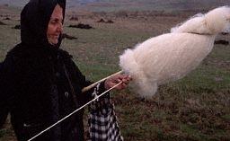 RomanianDropSpindler1994