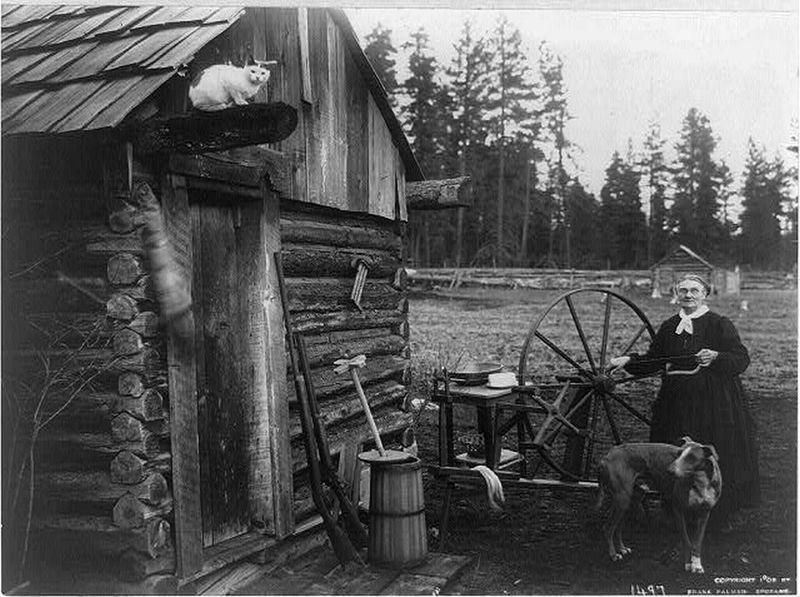 Washington Spinner Dog Cat 1908-lg