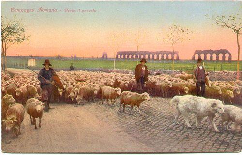 Italy Maremma Sheep PC1