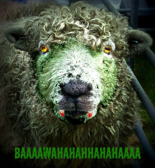 Halloween Sheep 2010