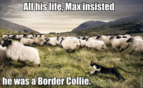 Max Insisted He Was a Border Collie