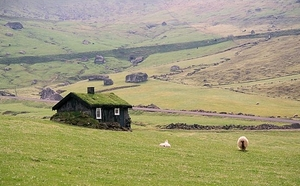 Faroes_sheep_house_landscape_2