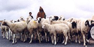 Morocco_shepherd_3