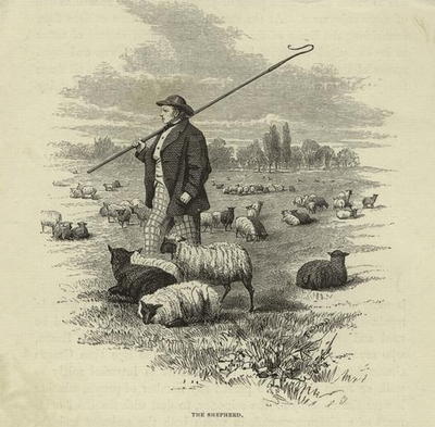 Nyc_central_park_shepherd_sheep_1_2