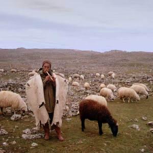 Cappadocian_shepherd